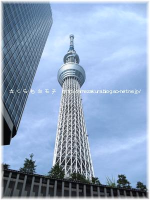 072401skytree.jpg